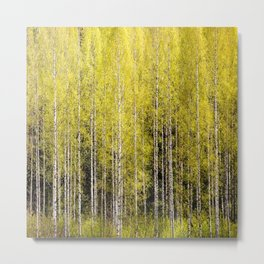 Lovely spring atmosphere - vibrant green leaves on the trees - beautiful birch grove Metal Print