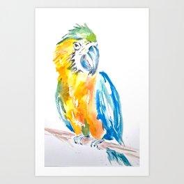 Parrot watercolour painting Art Print