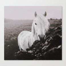 Beautiful Grey Canvas Print