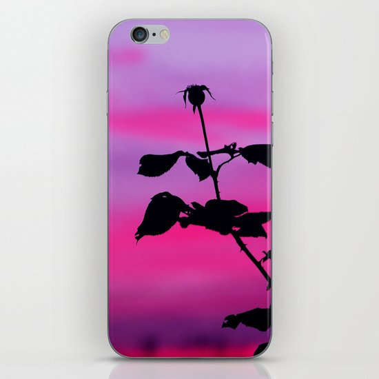 The Sunset of a Rose iPhone & iPod Skin