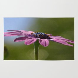 Macro Shot Of A Purple Osteospermum Rug