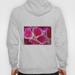 Godetia Pink and White Flower Hoody