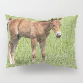 Little Colt Pillow Sham