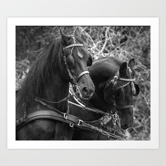 Friesian horses Art Print