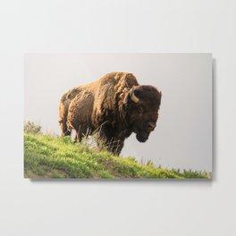 Bison - Yellowstone National Park Metal Print