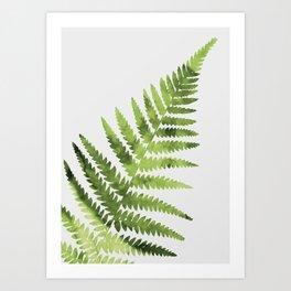 Farn Art Print