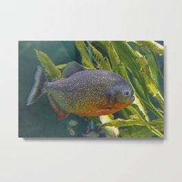 Piranhas #1 Metal Print