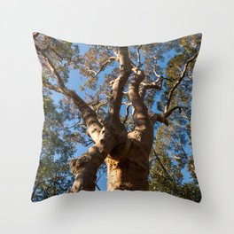 Scribbly Gum Tree Throw Pillow