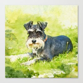 Miniature Schnauzer Watercolor Digital Art Canvas Print