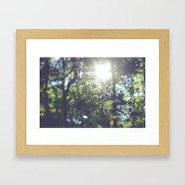 Sun Glare Framed Art Print