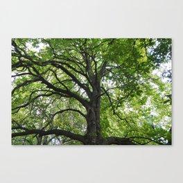 Reaching Branches Canvas Print