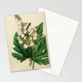 Flower 1668 begonia heracleifolia Parsnip leaved Begonia18 Stationery Cards