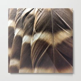 Barred Owl Feathers Metal Print