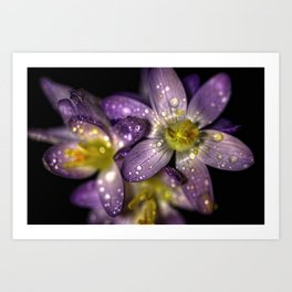 Water drops on flowers Art Print