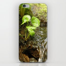 Green trickle iPhone Skin