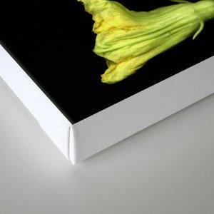 Squash Blossoms Canvas Print