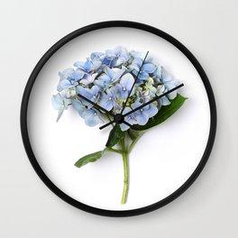 Blue hydrangea flowers Wall Clock