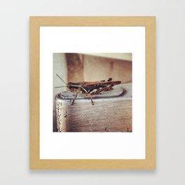 DinoFriends Framed Art Print