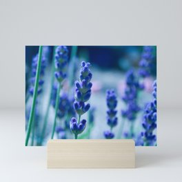A Touch of blue - Lavender #1 Mini Art Print