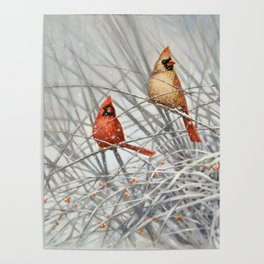 Cardinal Couple in Winter Poster