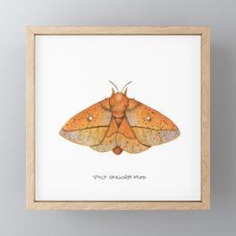 Spiny Oakworm Moth (Anisota stigma) Framed Mini Art Print