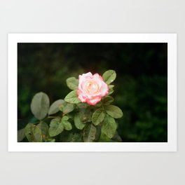 Flower Photography by Vo Danh Art Print