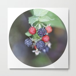 black berry Metal Print