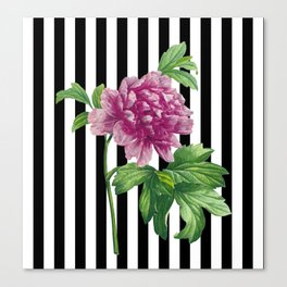 Pink Peony Black Stripes Chic Canvas Print