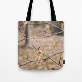 New spring growth and old decayed leaves on a Beech tree (Fagus sylvatica). Norfolk, UK Tote Bag