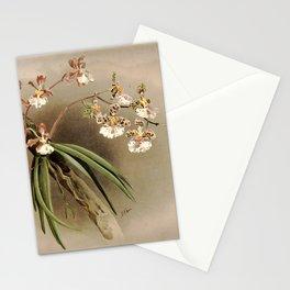 Vintage Orchid Print - Reichenbachia (1888) - Oncidium jonesianum & Oncidium jonesianum phaenthum Stationery Cards
