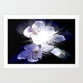 CHERRY BLOSSOMS. Art Print