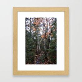 Woods 2 Framed Art Print