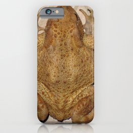 Overhead Anatomy Of a Bufo Bufo Toad iPhone Case