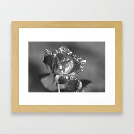 """Under the Rose"" by ICA PAVON Framed Art Print"
