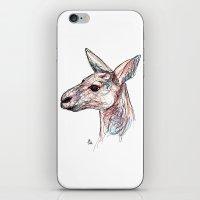 kangaroo iPhone & iPod Skins featuring Kangaroo by Ursula Rodgers