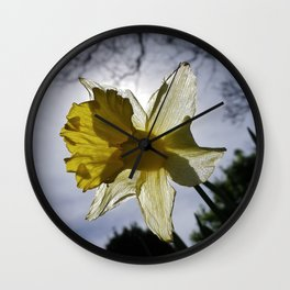 BACKLIT DAFFODIL Wall Clock