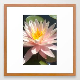 Water Lilly Framed Art Print