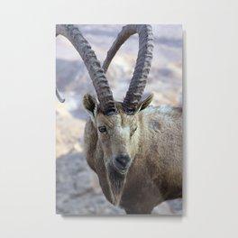 Ibex Metal Print