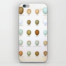 Vintage Bird Eggs  iPhone Skin