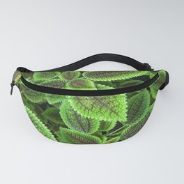 Moon Valley Pilea leaves Fanny Pack
