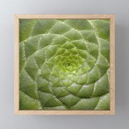 Aeonium Tabuliforme Framed Mini Art Print