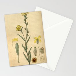 Flower 3087 farsetia lunarioides Lunaria like Farsetia10 Stationery Cards