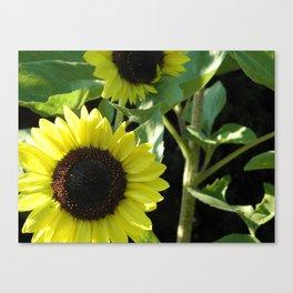 Growing Sunshine Canvas Print