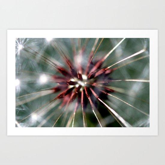 Dandelion Seed Head Art Print