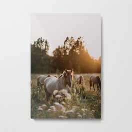 Wild konik horses | orange sunset | animal photographer | photo art print Metal Print
