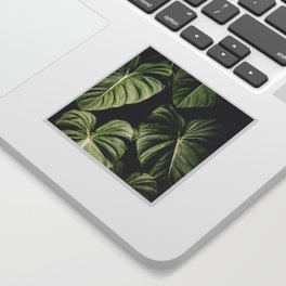 Monstera America Sticker