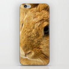 Little Rabbit II iPhone & iPod Skin