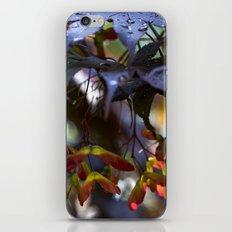 Japanese Maple Seeds III iPhone & iPod Skin