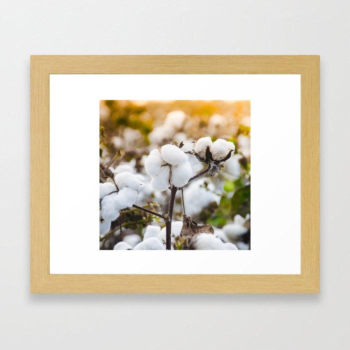 Cotton Field 4 Framed Art Print