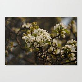 Spring 2016 (1)  Canvas Print